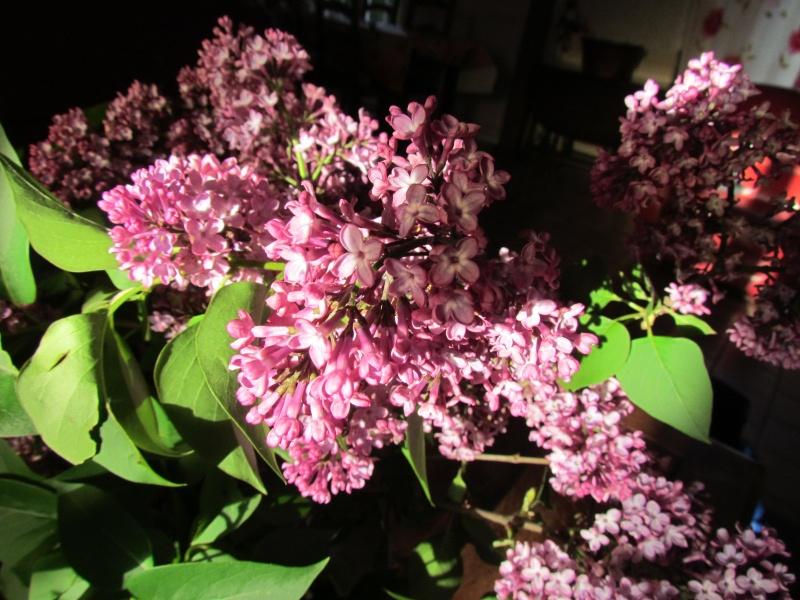 toutes les fleurs de couleur violette, bleue,  748