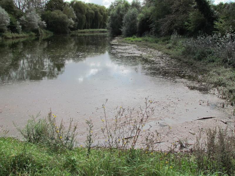 ils ont pollué, mon lac.......... - Page 3 811