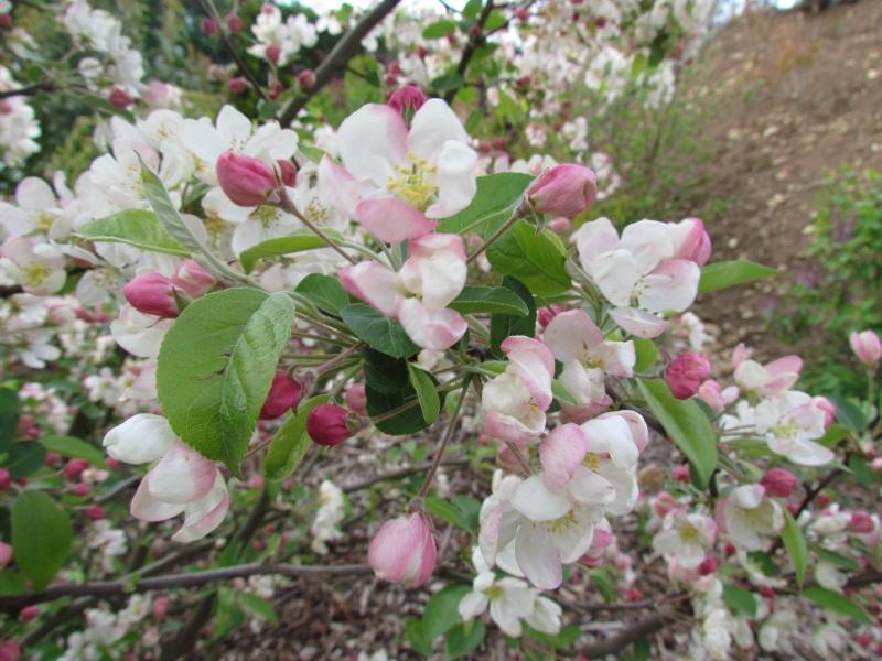 toutes les fleurs de couleur blanche  943