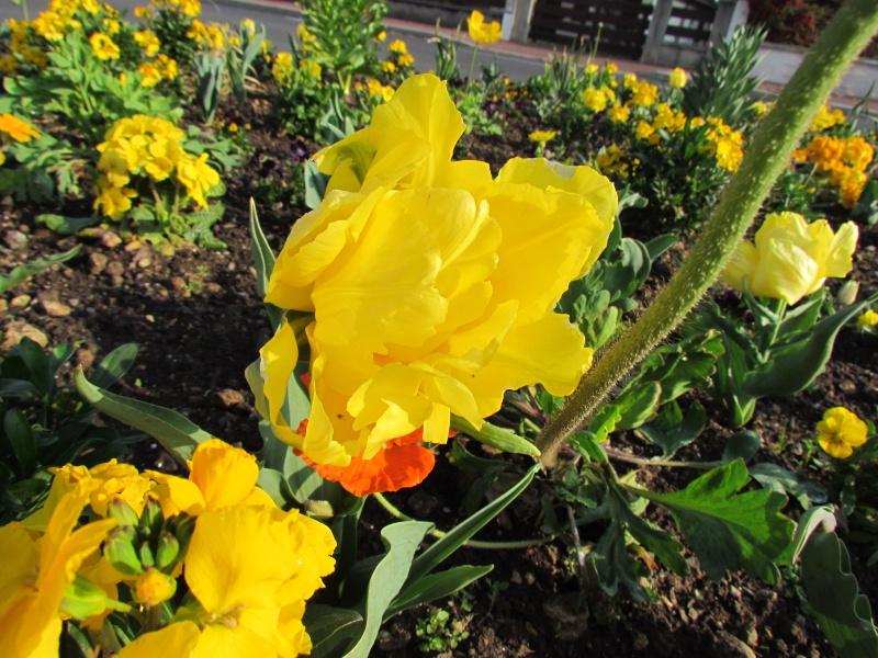 Toutes les fleurs de couleur jaune Fleurs19