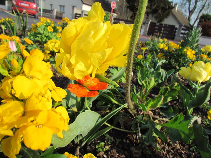 Toutes les fleurs de couleur jaune Fleurs22