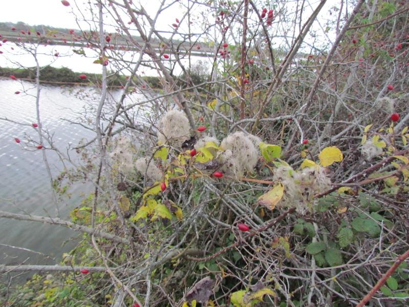 une digue qui lâche, une communauté d oiseaux qui s installe Img_1618