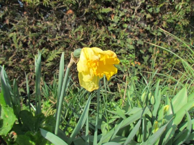 Toutes les fleurs de couleur jaune Img_5617