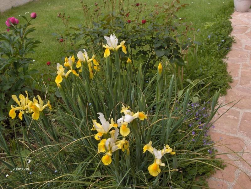 Les fleurs du jardin . Copie_10