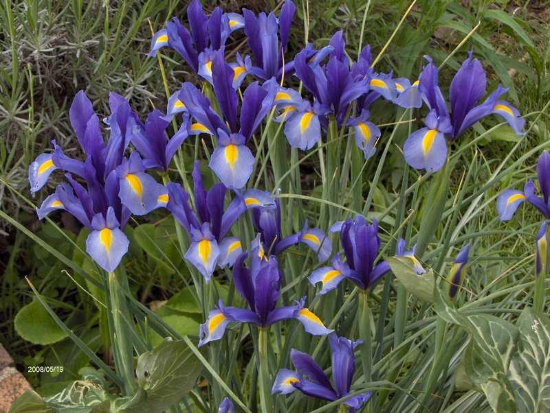 Les fleurs du jardin . Copie_11