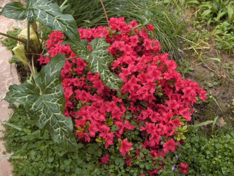 Les fleurs du jardin . Copie_12