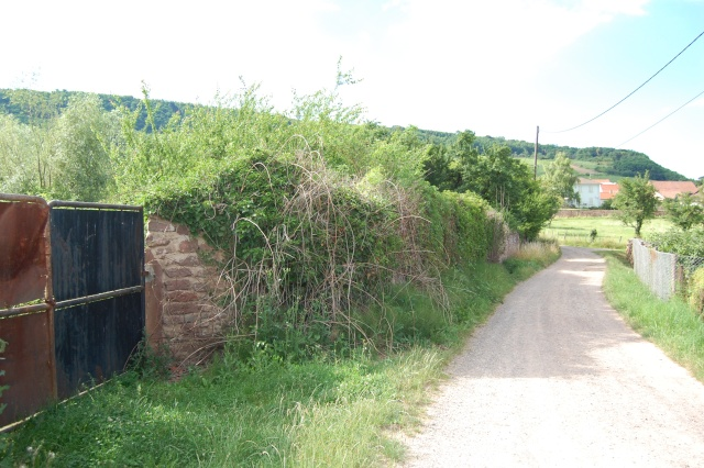 Petite escapade à Wangen en juin 2008 Dsc_1496