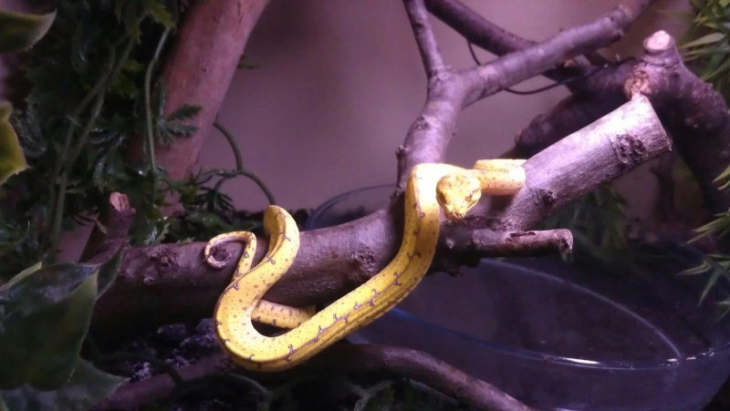 mes reptiles 33742810