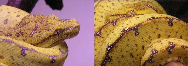 mes reptiles Collag10