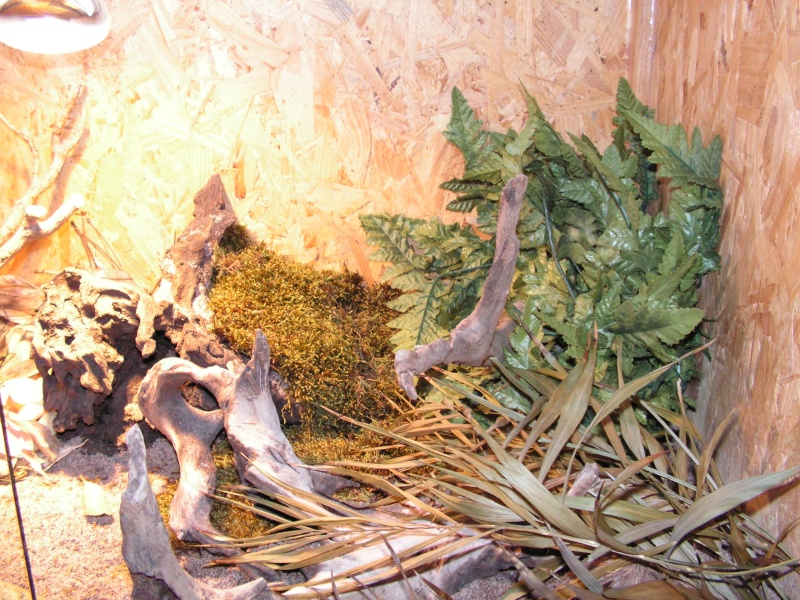 mes reptiles Pict0016
