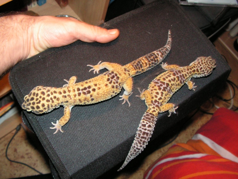 mes reptiles Pict0210