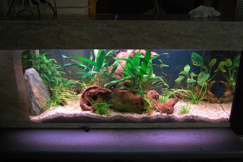 mes aquarium en partie (1) Dsc_2712