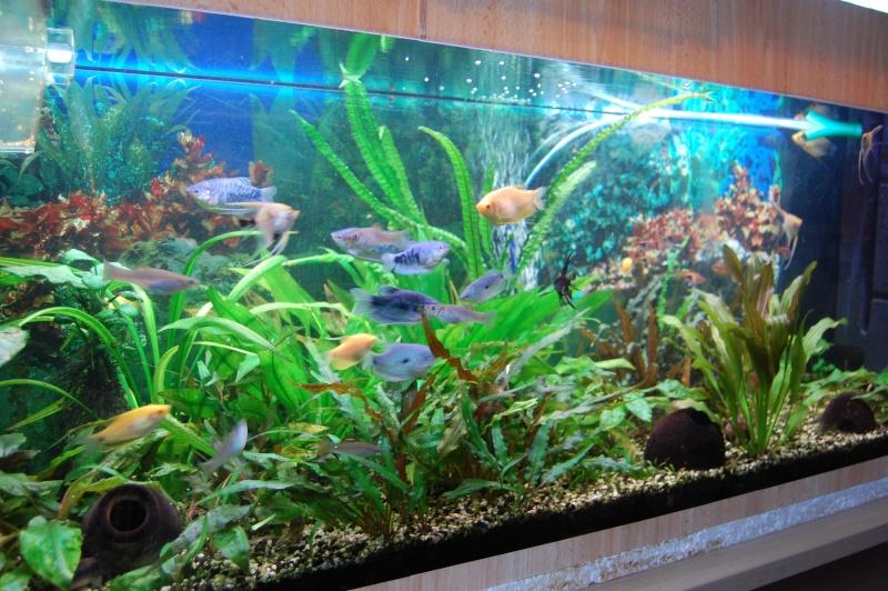 mes aquarium en partie (1) Dsc_2714