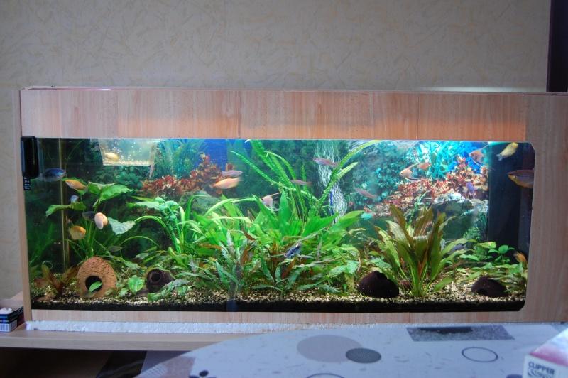 mes aquarium en partie (1) Dsc_2715
