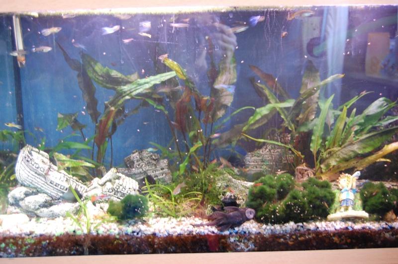 mes aquarium en partie (1) Dsc_2716