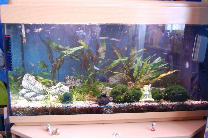 mes aquarium en partie (1) Dsc_2717