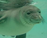 PROTEGEZ l'habitat des phoques moines hawaien en danger ! 32191410