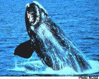 Stop a la chasse des baleines, Stop aux subventions ! Balein11