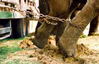 Pour interdire le cirque Vasquez a Denver, (18-26/06/08) Circus10