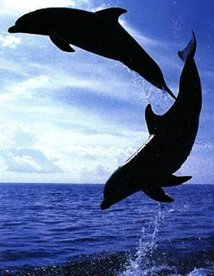Agissez pour stopper la capture des dauphins sauvages ! Dauphi10