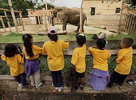 Le futur de Jenny l'éléphante d'Afrique ... Jenny10