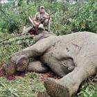 Stop Animals Genocid lance une pétition contre le site Voyage-chasse.com !!! Safari16