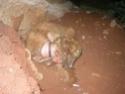 ANIMAUX torturés à Mayotte Mayott15
