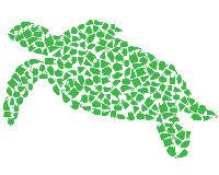 Engageons nous pour la protection des océans Tortue13