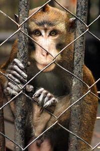 Demandez une révocation de l'accréditation du zoo de DICKERSON Zoo10