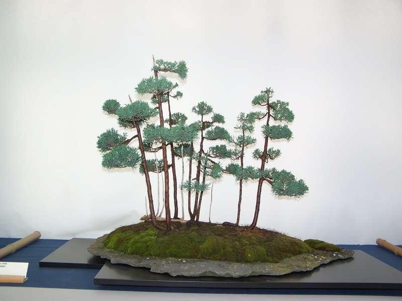 expo bonsai Rouen jardin des plantes 1 et 2 octobre 2011 - Page 2 100_5174