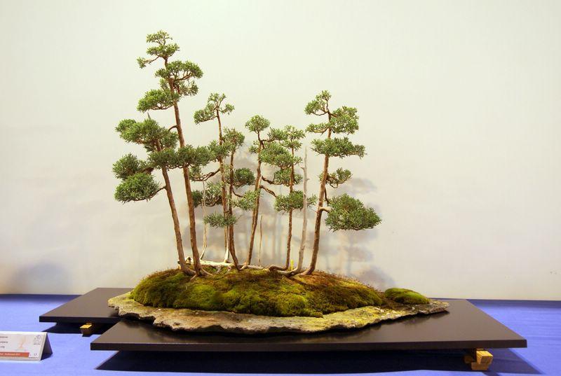 expo bonsai Rouen jardin des plantes 1 et 2 octobre 2011 - Page 2 Dsc01511