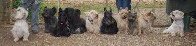 ASTE-Association de Sauvetage des Terriers d'Ecoss Les_te10