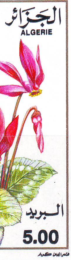 Variétés à l'infini.......... - Page 12 Image227