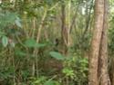 Jungle CTF in Vega Baja Hpim2110