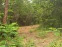 Jungle CTF in Vega Baja Hpim2111