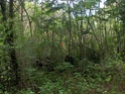 Jungle CTF in Vega Baja Hpim2112