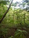 Jungle CTF in Vega Baja Hpim2113