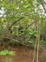 Jungle CTF in Vega Baja Hpim2114