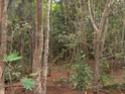 Jungle CTF in Vega Baja Hpim2115