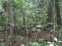 Jungle CTF in Vega Baja Hpim2116