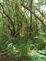 Jungle CTF in Vega Baja Hpim2122