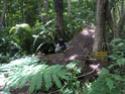 Jungle CTF in Vega Baja Hpim2123