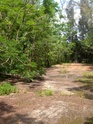 Jungle CTF in Vega Baja Hpim2124