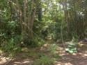 Jungle CTF in Vega Baja Hpim2210