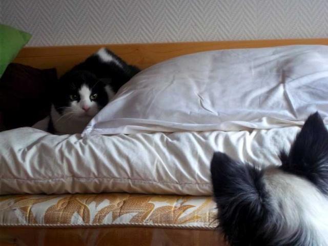 PORTER, Darcy, Emi et .... MARVEL le poulain quarter ! 100_0314