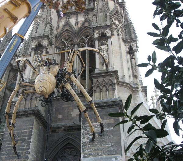 araignée à identifier Cathad10