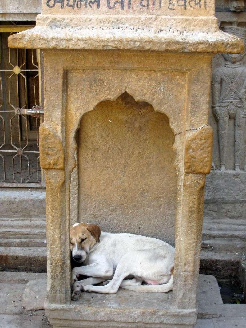 Inde, carnet de route 2011 - Page 2 Img_4046