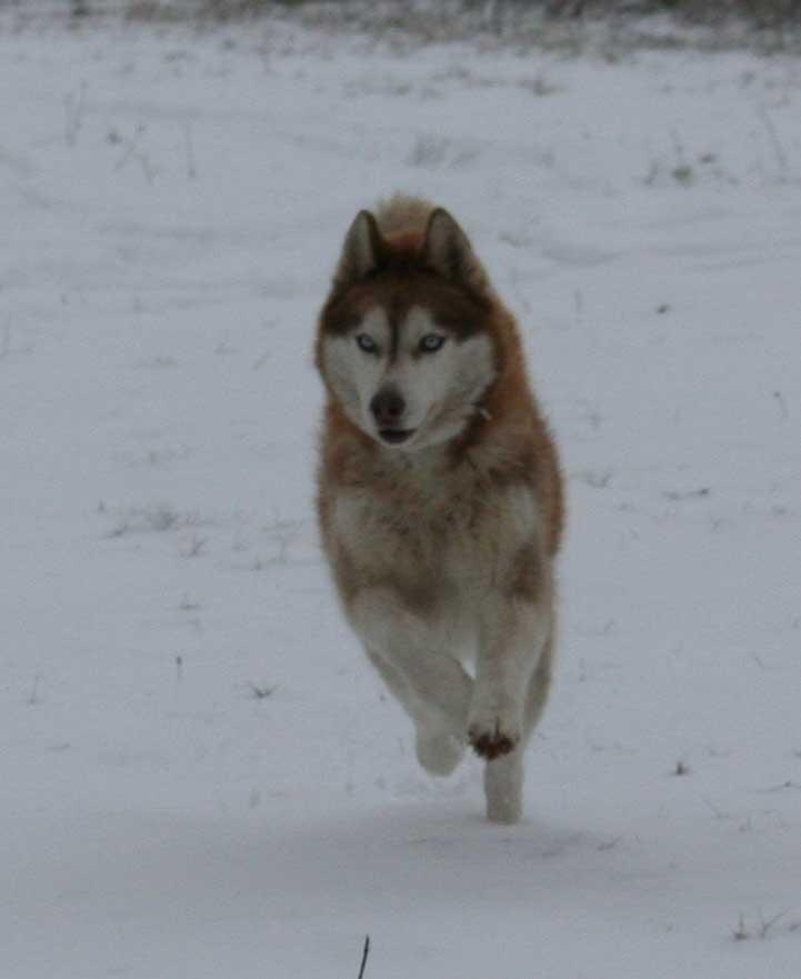 Pendant ce temps à ChonchonLand il neige ^^ Neige-11