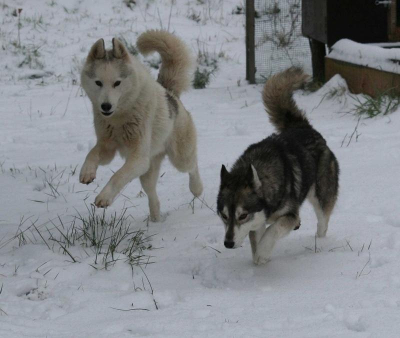 Pendant ce temps à ChonchonLand il neige ^^ Neige-13