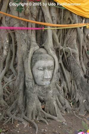 Les temple d'Ayutthaya, Thaîlande Ayutha11